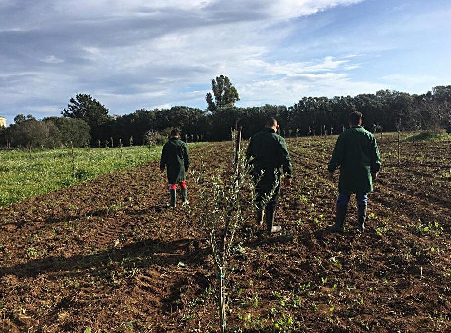 Gli alunni del corso agrario preparano il nuovo uliveto